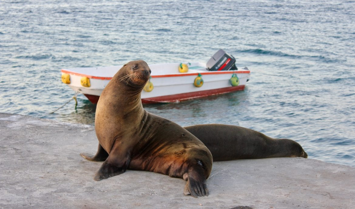 Must Visit Sites in the Galapagos
