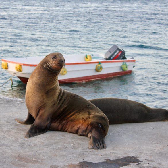 best time of year to visit galapagos