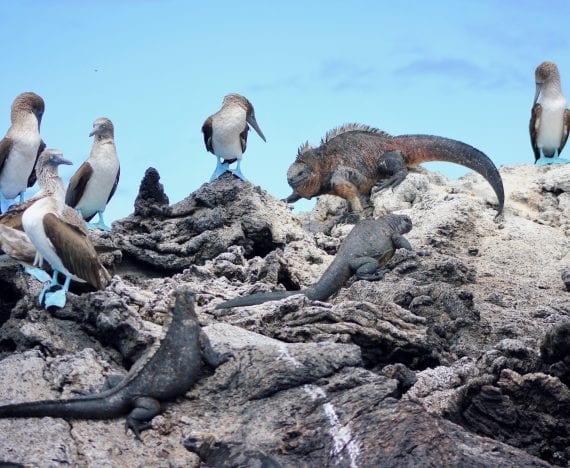 the galapagos guide